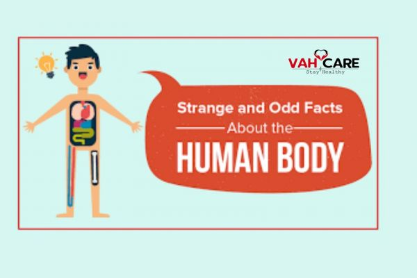 some Intresting Facts About Human Body you must know